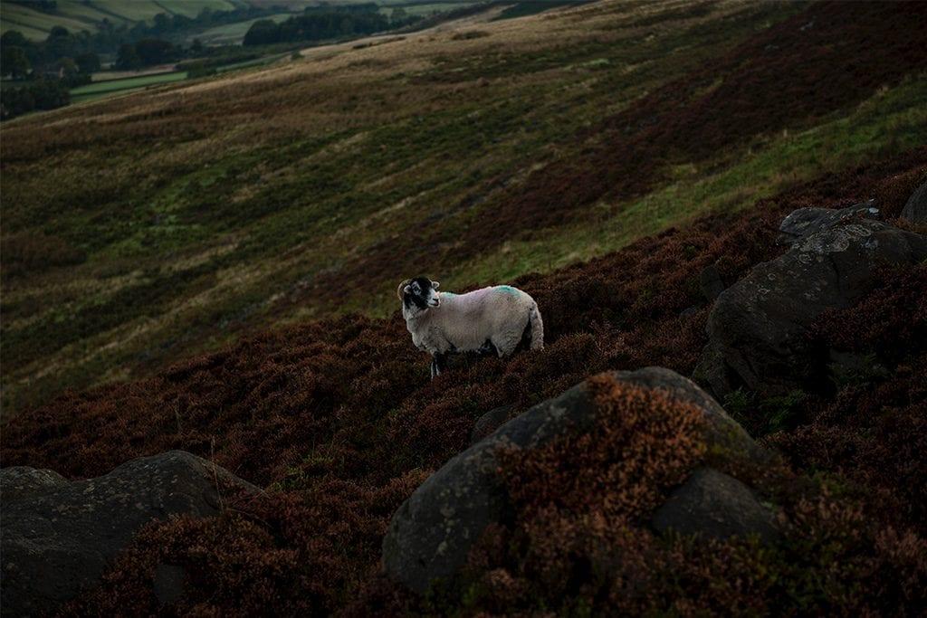 Good Shepherd | Hearing The Savior